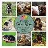 Dixi Craft - Toppers - Puppys - Color