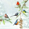 CraftEmotions - Servetten - Winter vogels